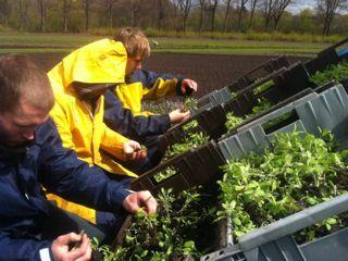 Bewoners zorgboerderij aan het werk in de tuinen